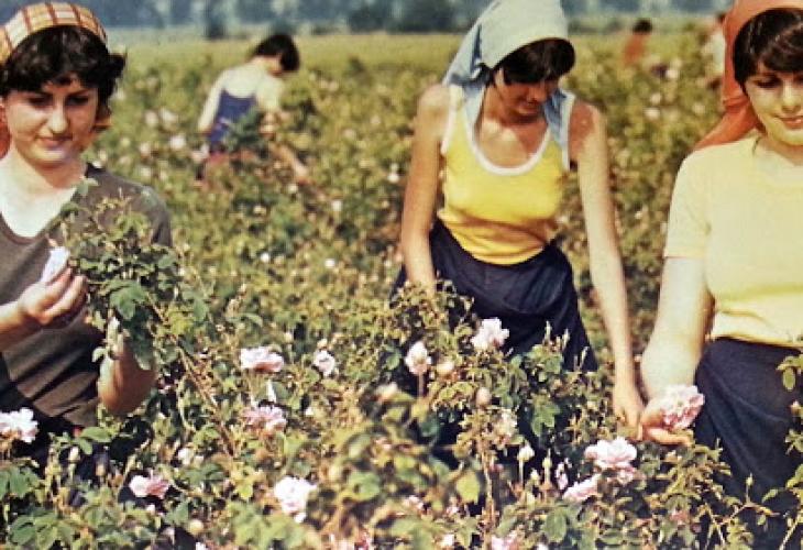 От Асоциацията на земеделските производители настояват всички безработни