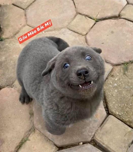 Сладко животинче от неясен вид стана абсолютен хит