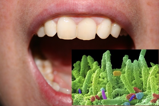 Средно около 100 до 200 различни бактериални вида щастливо си