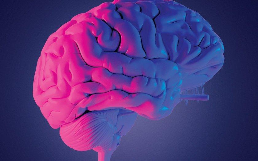 Мозъкът е главният и най-сложно устроен орган на