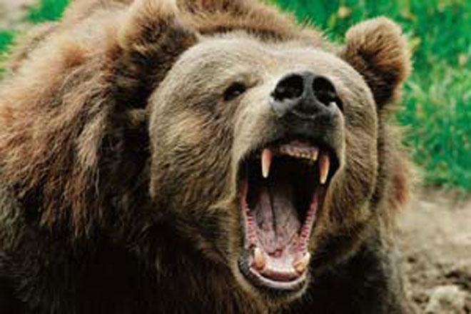 Кафява мечка е нападнала и умъртвила в три различни дни