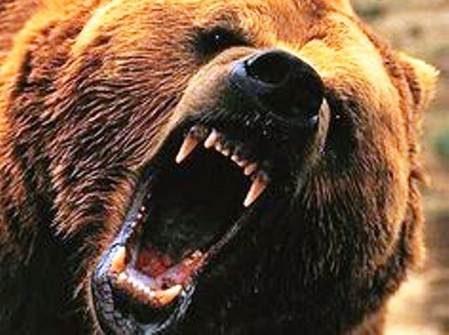 Властите смятат, чеглобалното затопляне е виновноза активността на мечките, които