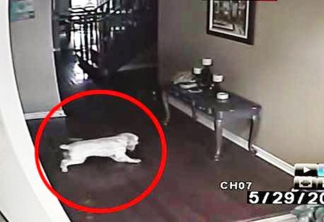 Неговото куче се втурва от стаята, а паралелно с него
