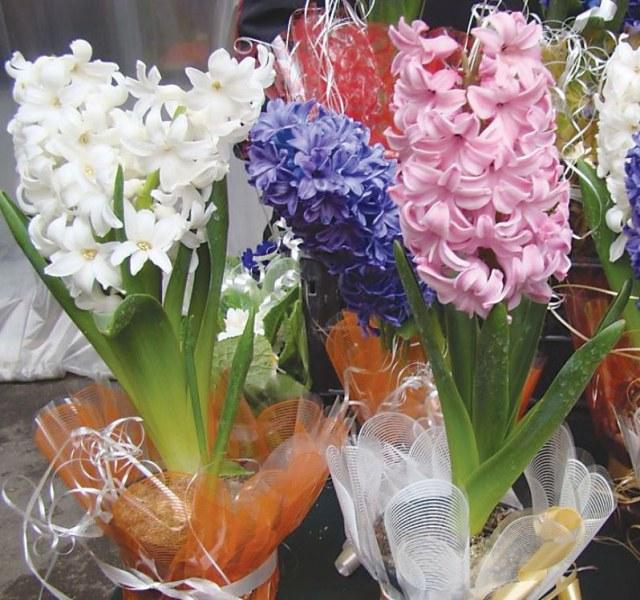 Най-скъпоструващите цветя ще купуваме на тазгодишния 8-ми март.