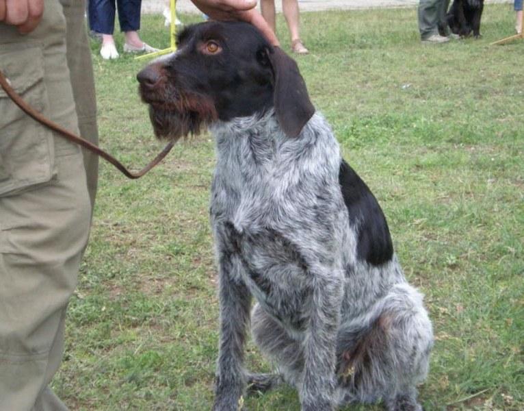Двама крадци на ловно куче са установени и