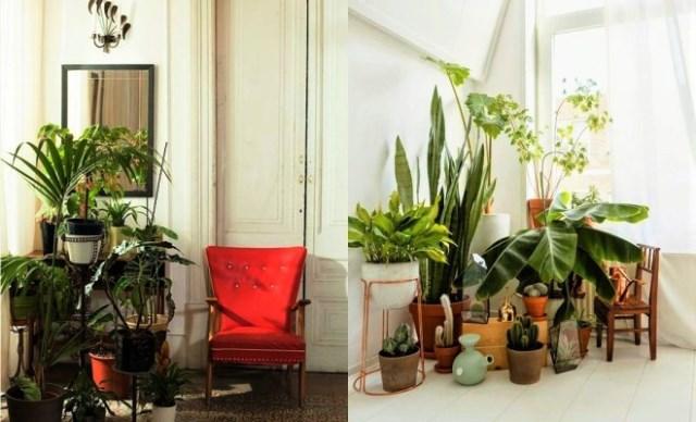 Ако отглеждате в дома си цветето-талисман спрямо зодията си, ще