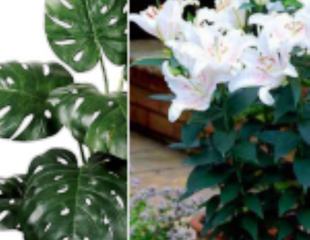 В някои растения, въпреки, че са красиви има парлив сок.