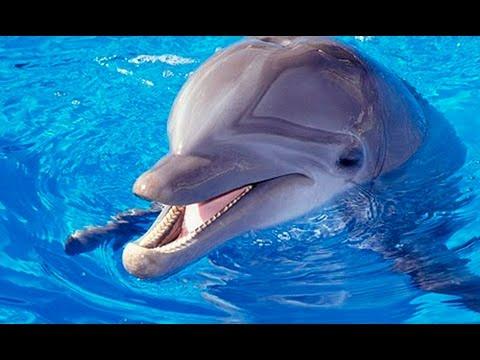 Въпреки демонстрацията пред сградата на делфинариума, представленията не бяха отменени.