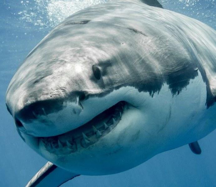 Триметрова акула атакува и уби 60-годишен сърфист в