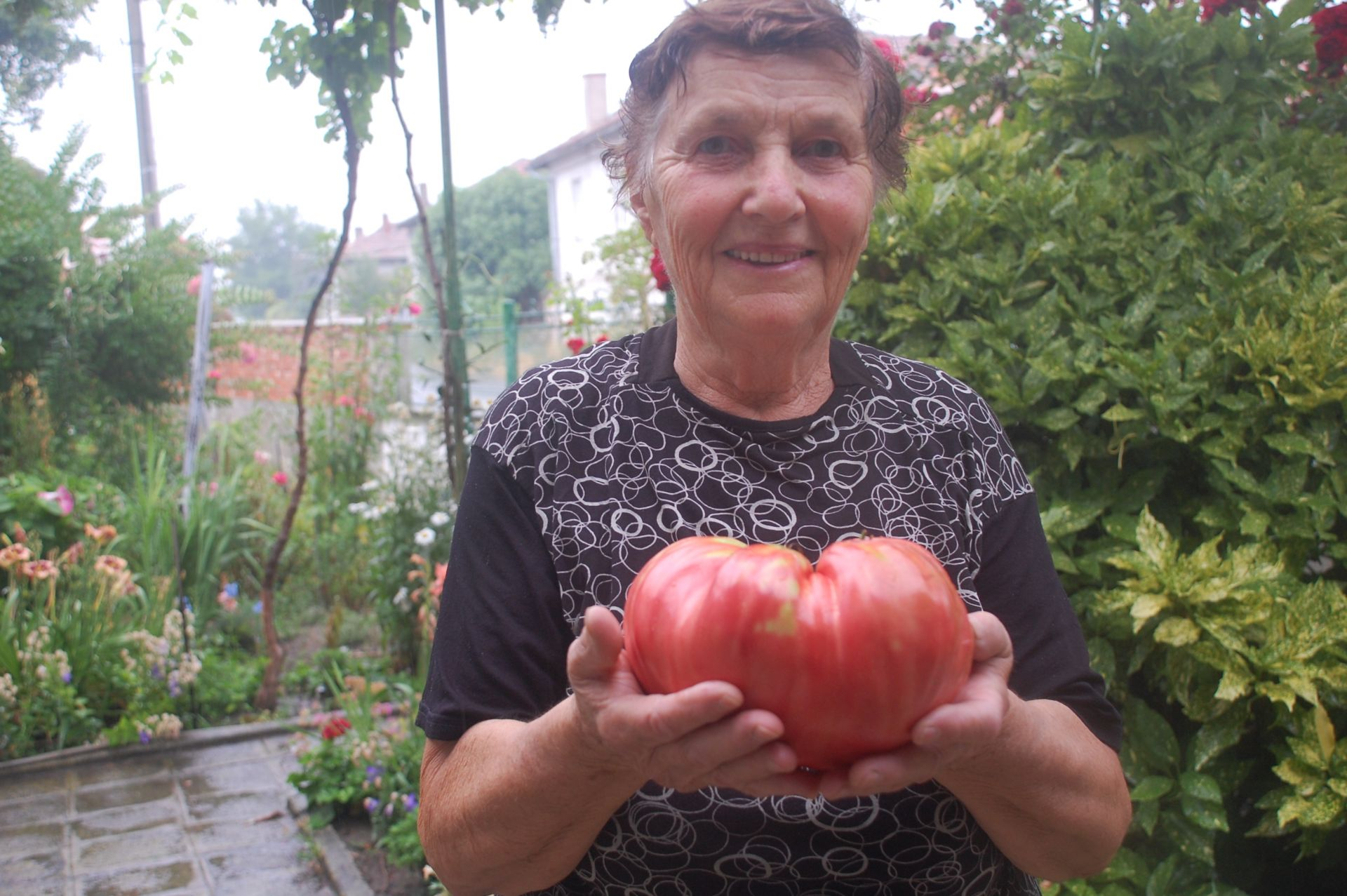 Всички растения родили едри вкусни домати, но рекордьорът изумил както