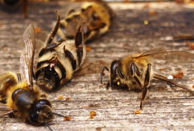 """""""Първо ще изчезнат пчелите, след тях лукът и чесънът, а"""