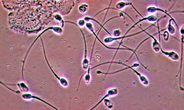 Те засищат добре, но влияят негативно на мъжкиячерен дроб, качват