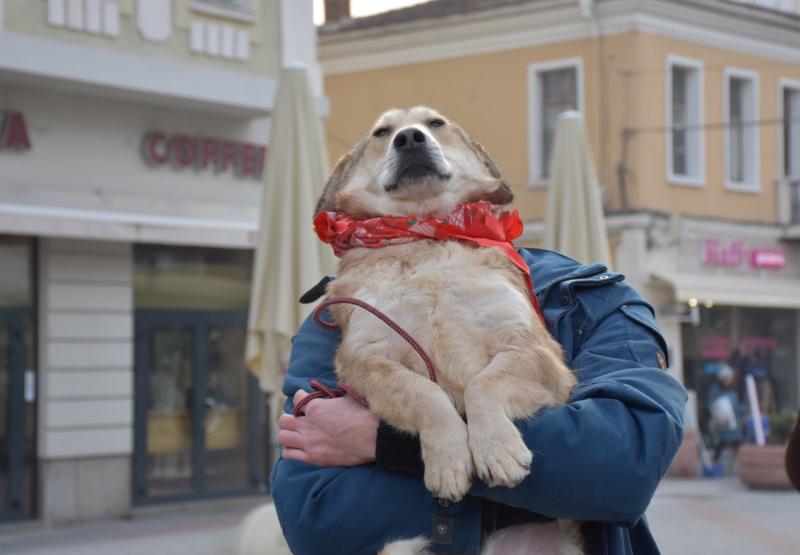 Над 2000 собственици на кучета в Пловдив все