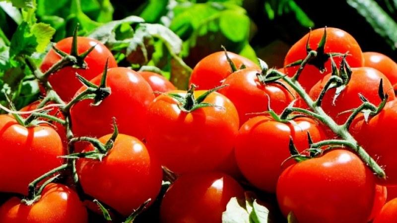 Цената на доматите отново скочи и стигна 10-годишен