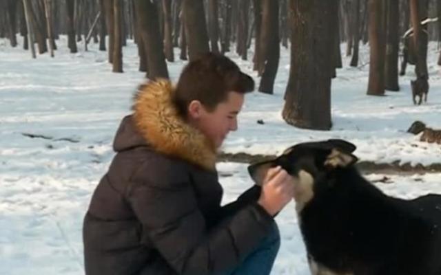 Резултат с изображение за Историята на кучето Сара, която разплака цяла България
